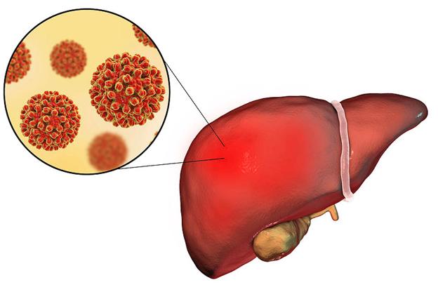 Чем опасно носительство вируса гепатита В?