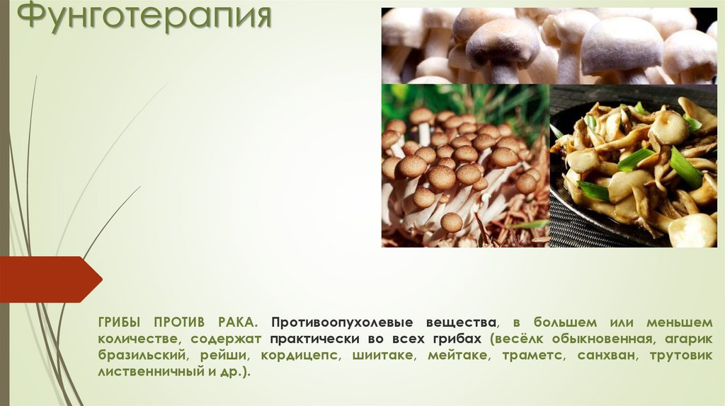 Использование грибов при гепатите в пищу и в качестве лекарства