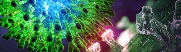Проведение генотипирования гепатита С и какой генотип самый опасный?