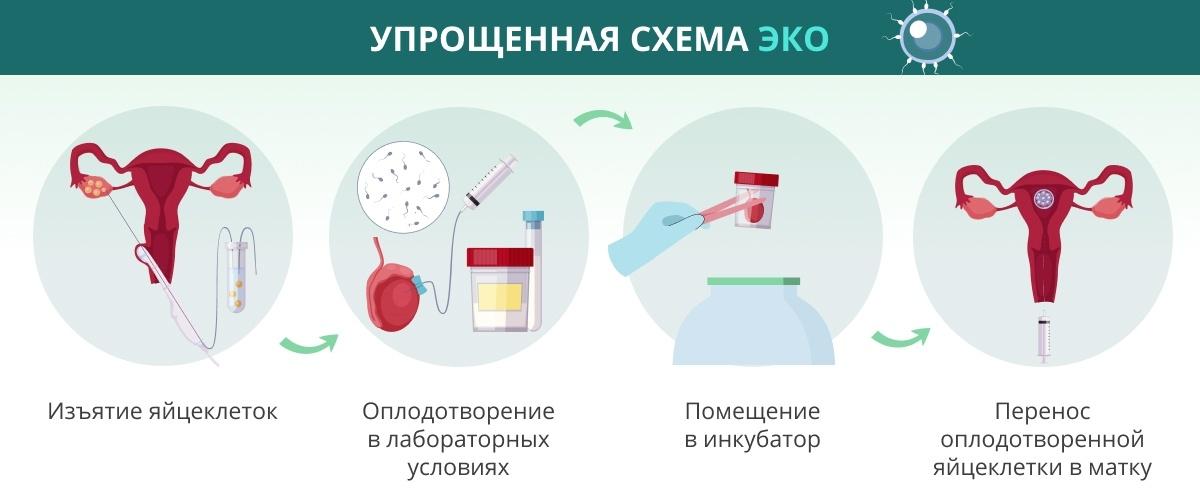 Планирование беременности при гепатите С у мужа и процедура ЭКО