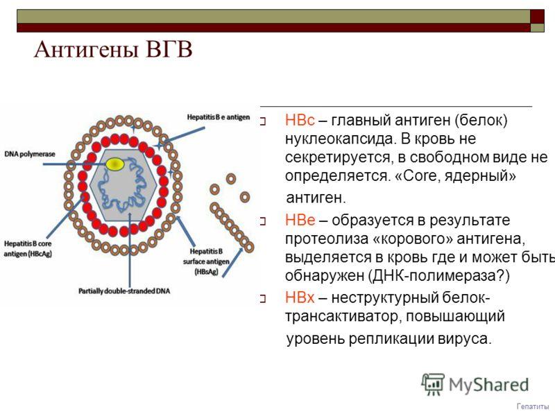 Что такое HBeAg – HBe антиген вируса гепатита В?