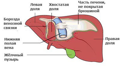 Лекарственная интоксикация печени