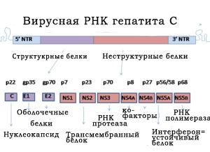 Вирусная РНК гепатита С