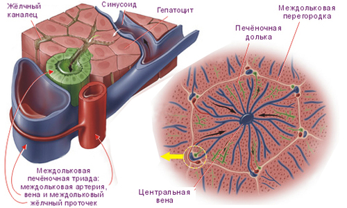 Лечение гепатита с москва стоимость