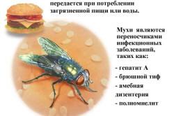 Способы заражения гепатитом А