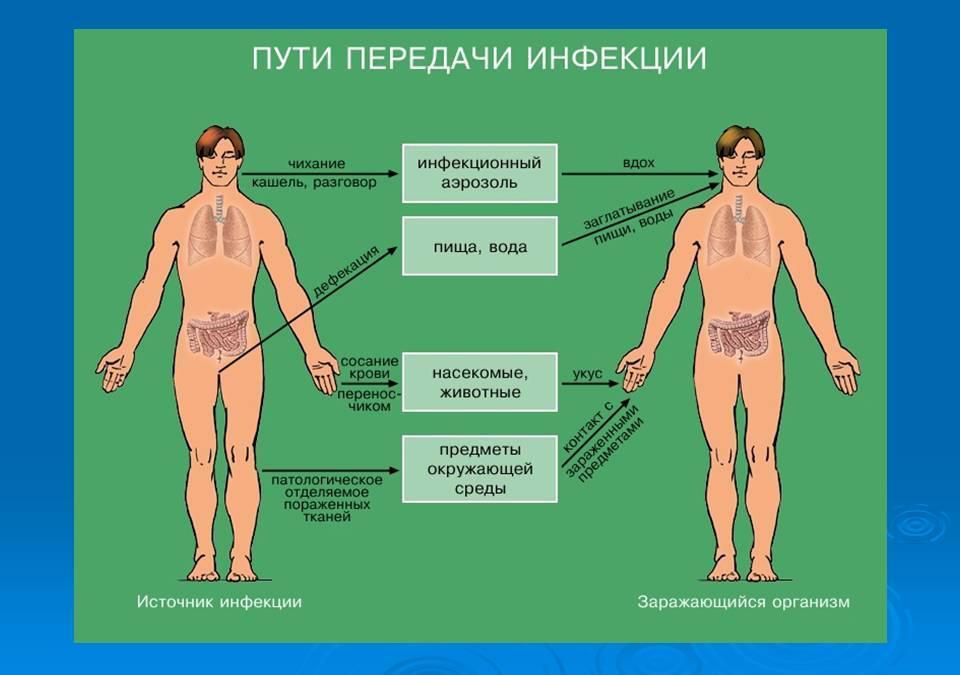 Сдать анализы на гепатит б