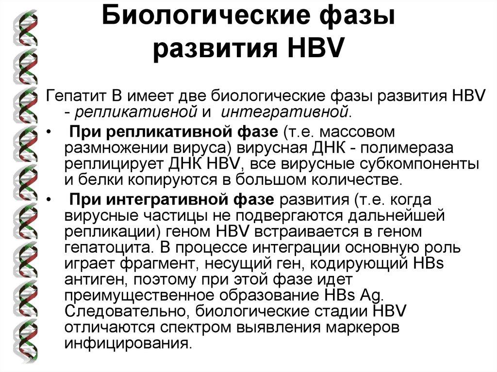 Фазы вирусного гепатита С