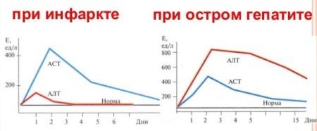 Показатеи АЛТ и АСТ при гепатите и инфаркте