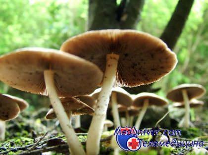 Полезные для печени грибы