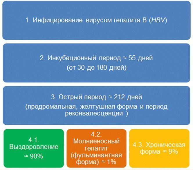 Прогноз развития HBV