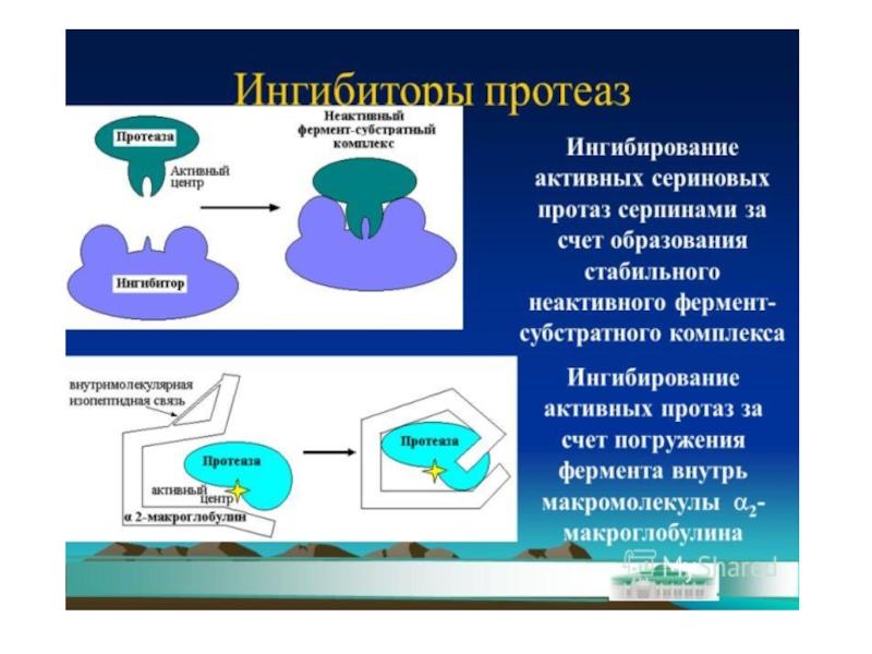 Ингибитор протеазы