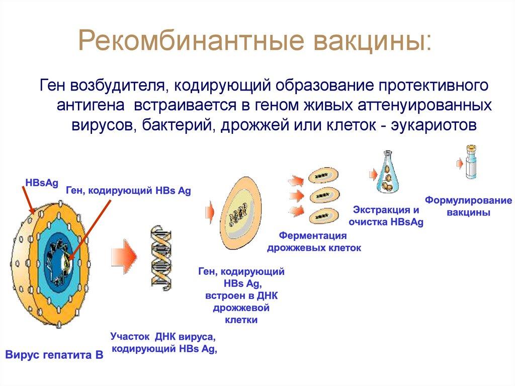 Характеристика рекомбинаторных дрожжевых вакцин
