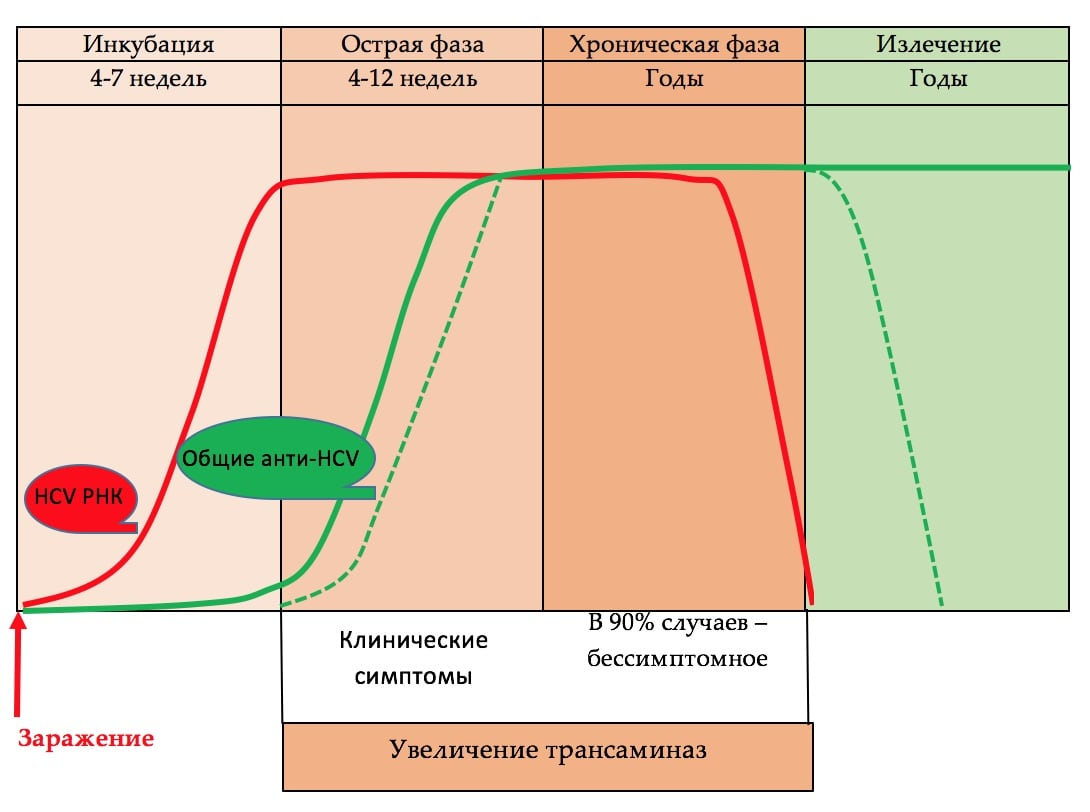 Маркеры HCV