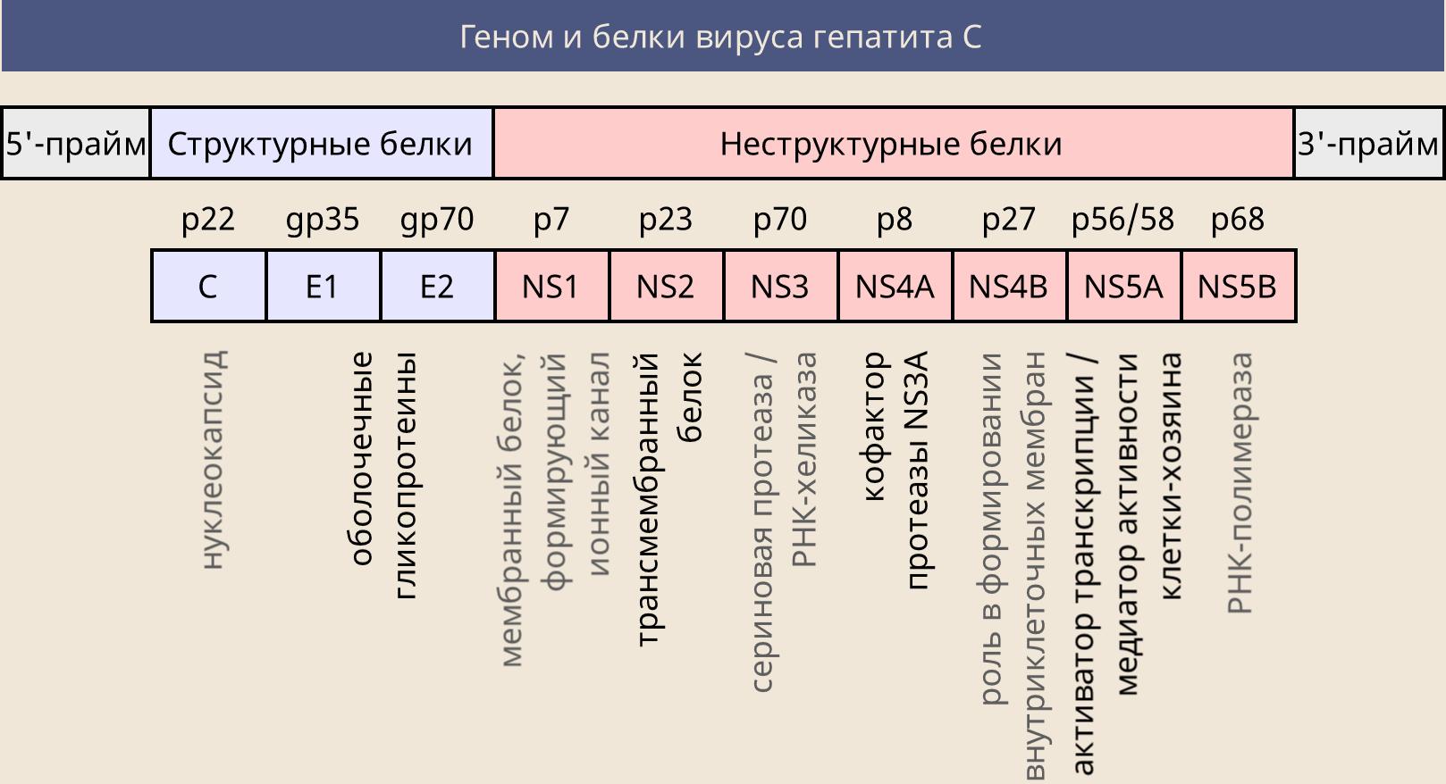 Положительный анализ на гепатит C