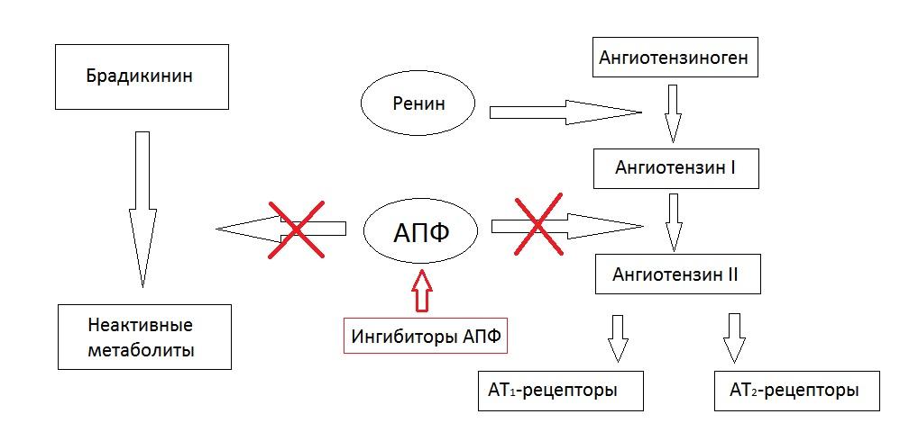 Механизмы действия ингибиторов