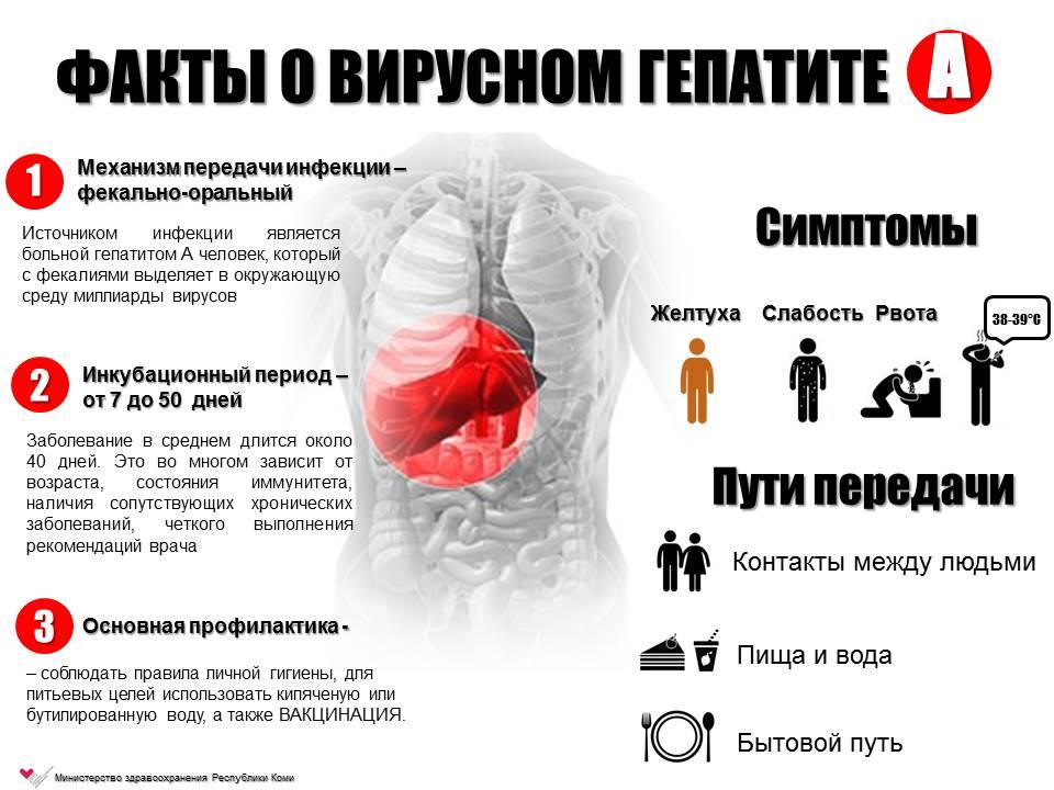 Инкубационный период гепатита А